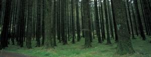 denseTrees