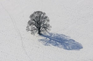 Trees-and-their-shadows-from-above-03-634x422