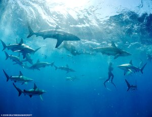 swim_with_sharks (1)